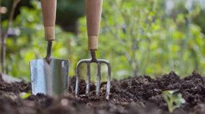 Come rinnovare il prato in 6 semplici mosse