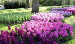 Lavori del mese di Maggio in giardino