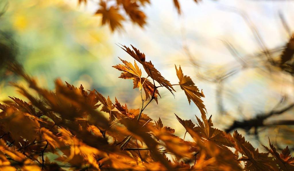 Lavori del mese di Ottobre in giardino
