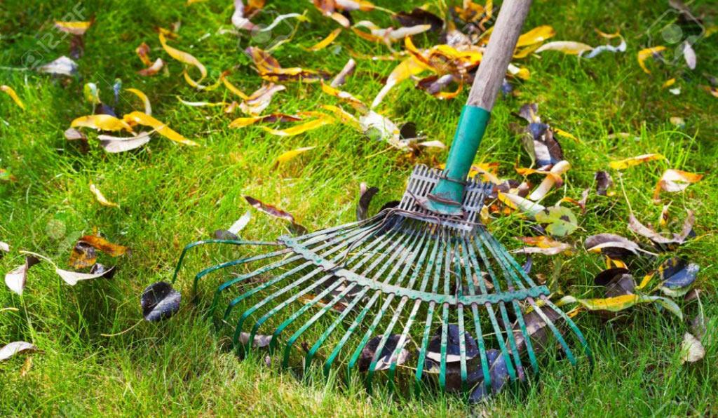 Lavori del mese di Novembre in giardino