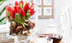 Read more about the article Come far crescere i bulbi in acqua