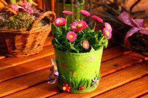 Spazio: ad ogni cosa il suo posto e a ogni pianta il suo vaso