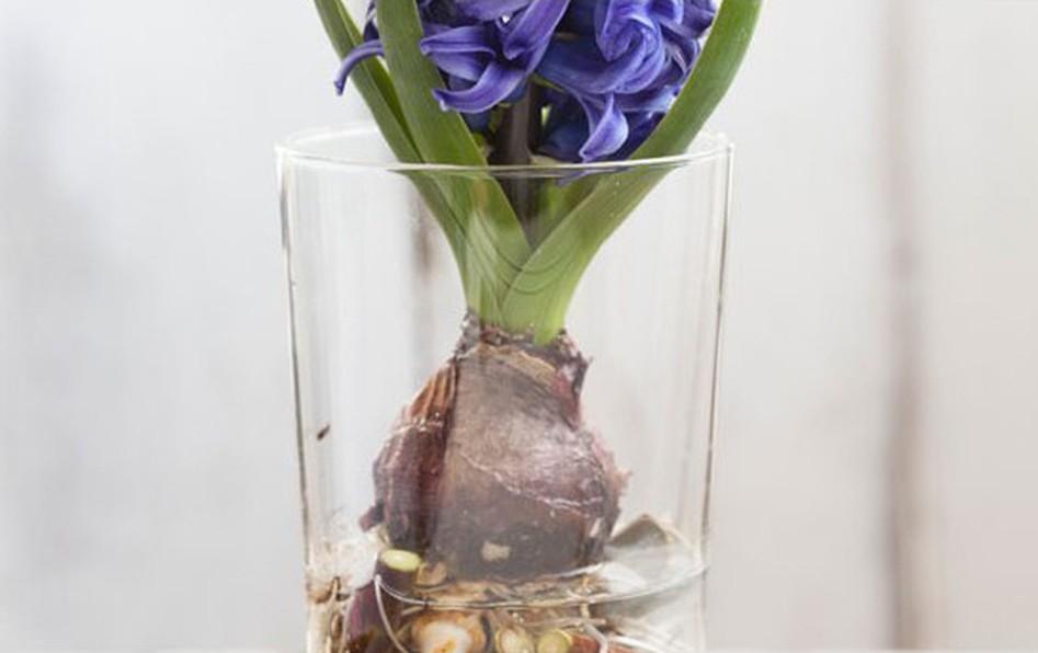 Come forzare la fioritura per avere un pizzico di primavera quando volete voi!
