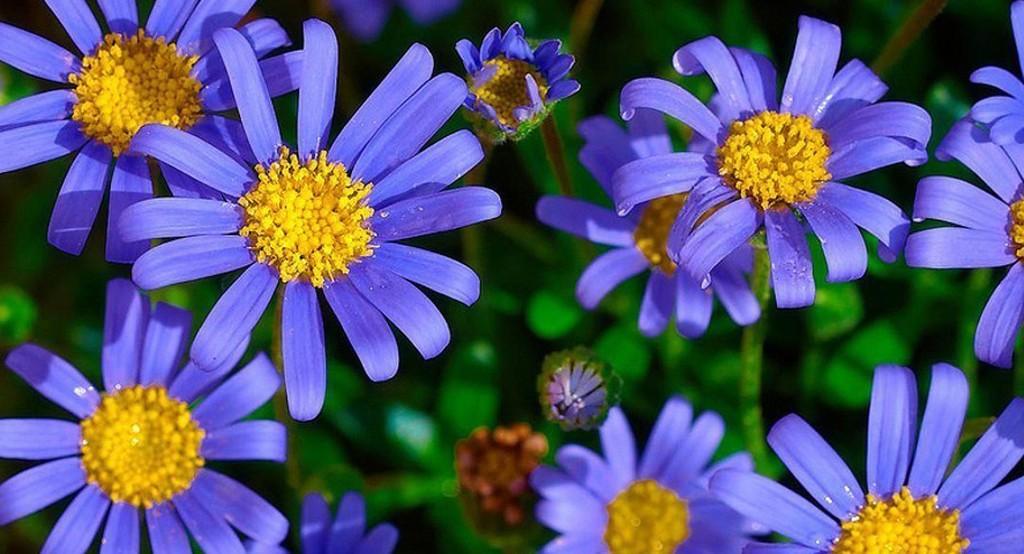 5 trucchi per un giardino fantastico