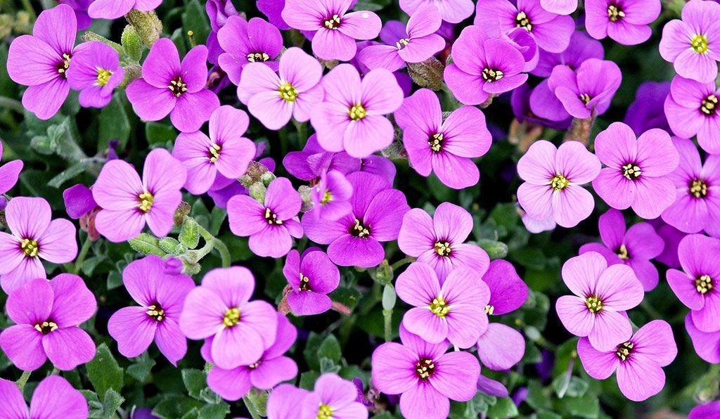 I fiori nel mese di giugno